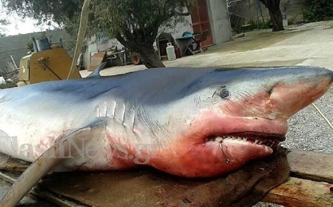 shark_cover